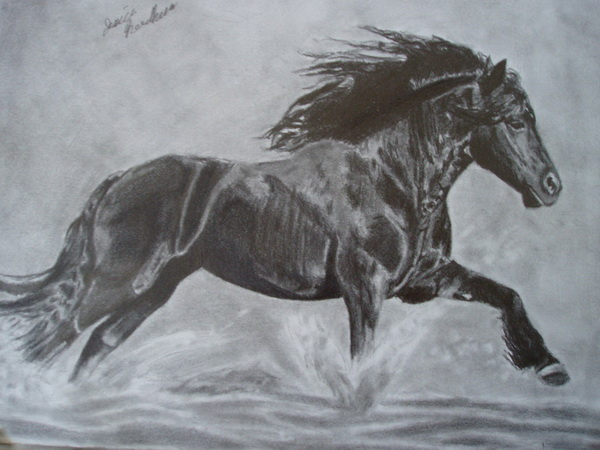 horse drawing 9