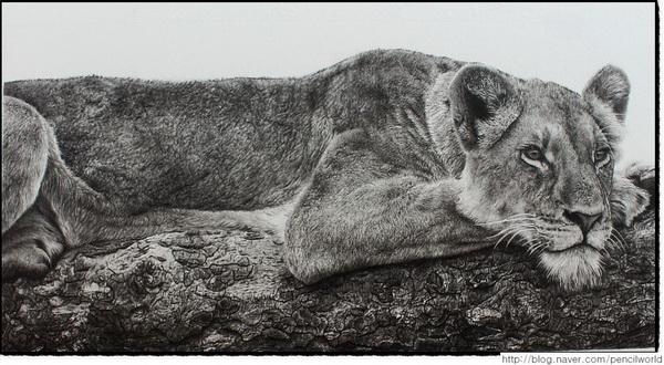 lion drawing 10