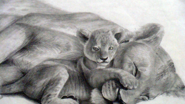 lion drawing 11