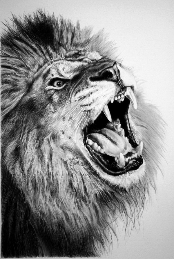 lion drawing 12