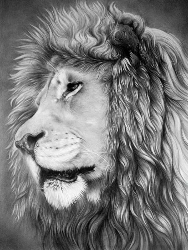 lion drawing 4