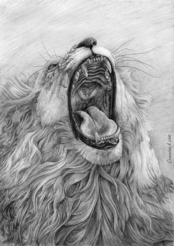 lion drawing 6