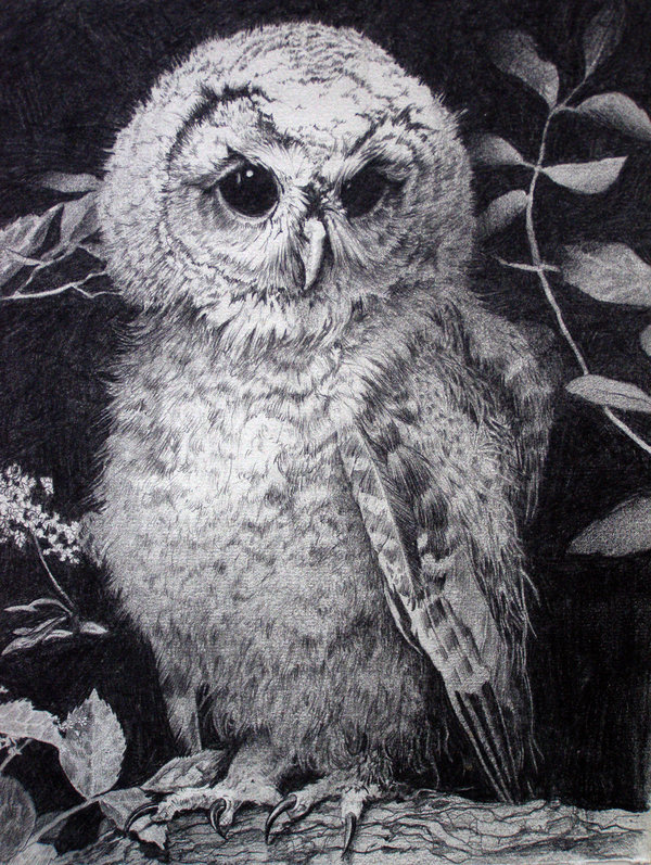 owl drawing 1