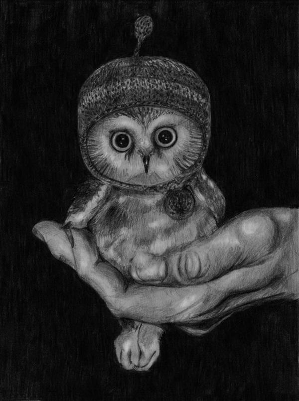 owl drawing 10