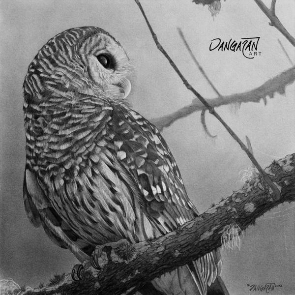 owl drawing 12