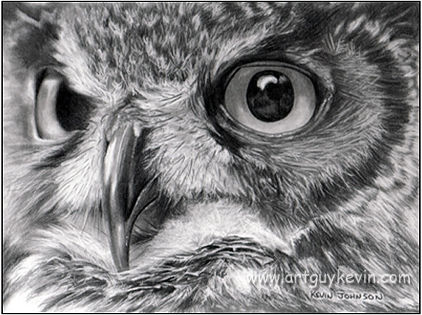 owl drawing 2