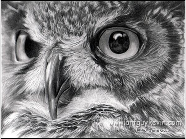 owl drawing 2