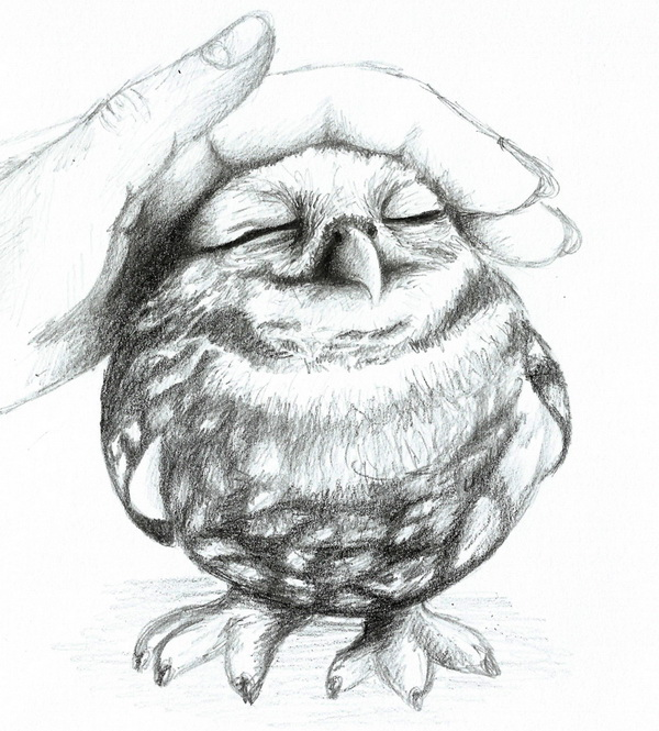 owl drawing 3