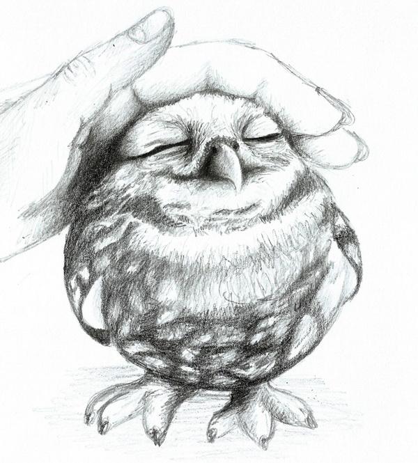 owl drawing 3