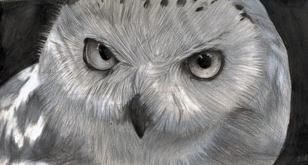 owl drawing 4