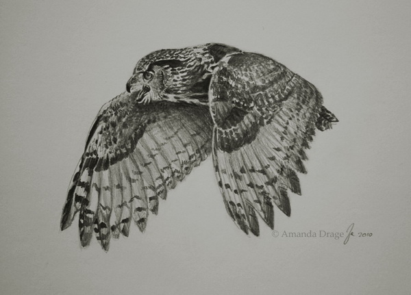 owl drawing 5