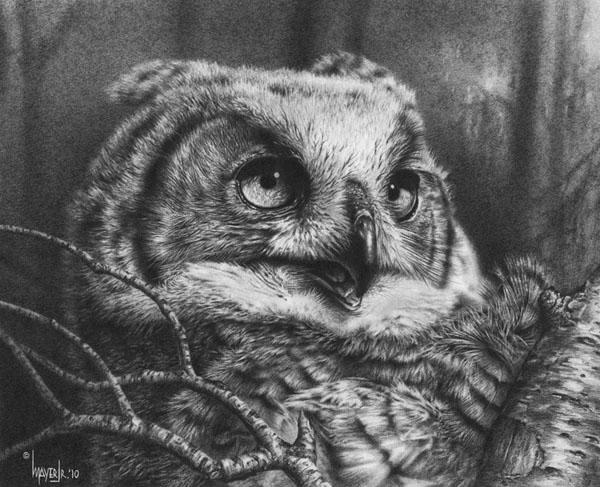owl drawing 6