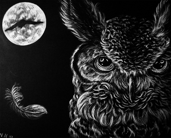 owl drawing 7