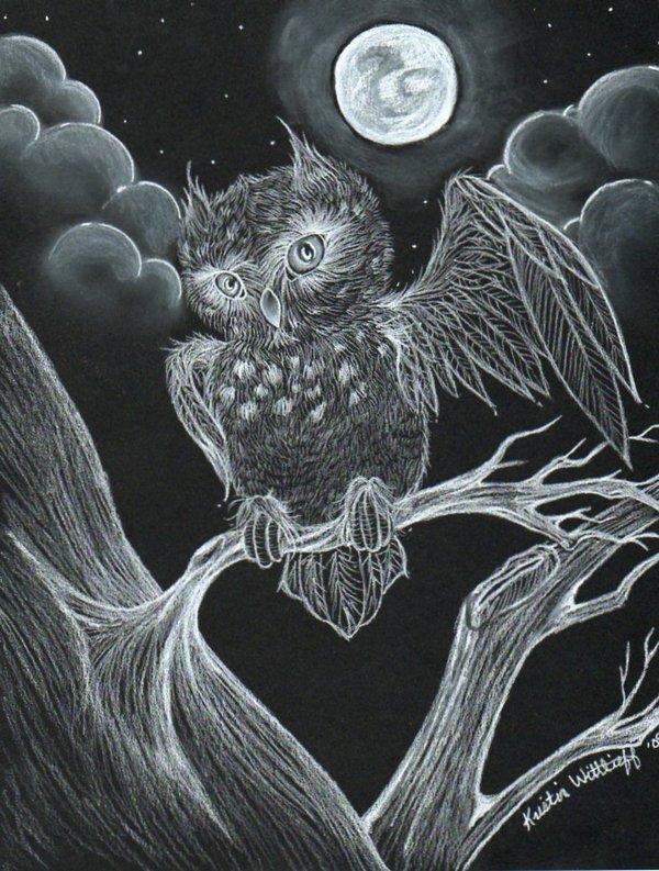 owl drawing 8