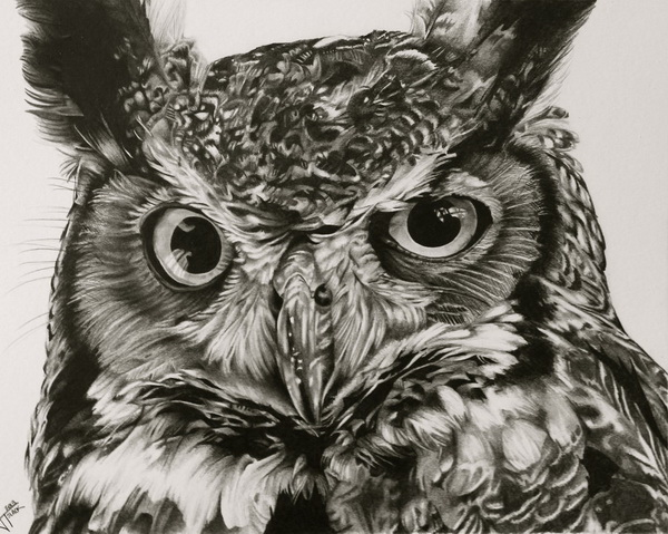 owl drawing 9