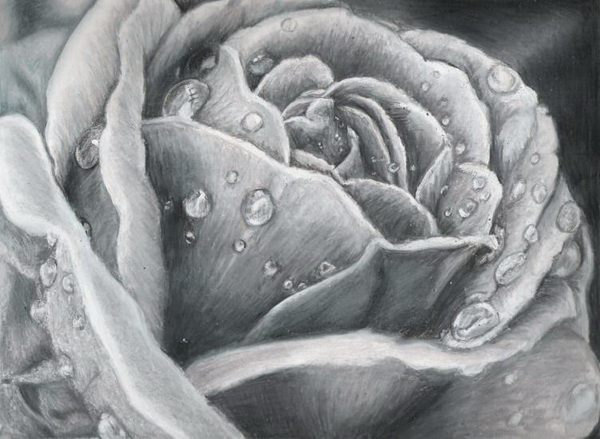 rose drawing 11
