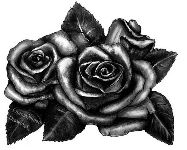 rose drawing 12