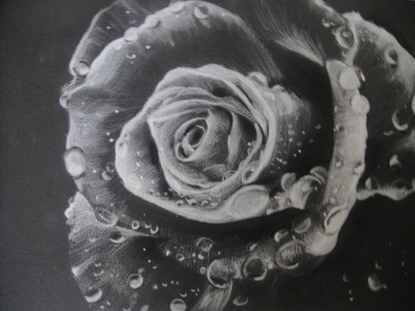 rose drawing 3