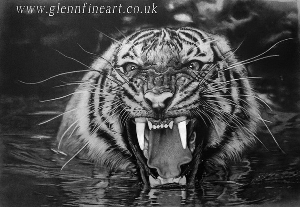 tiger drawing 10