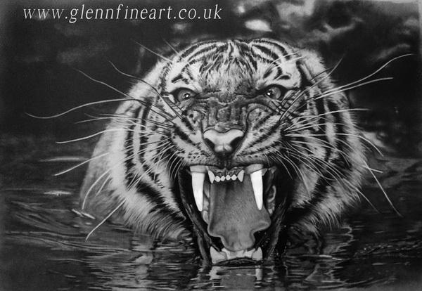 tiger drawing 10