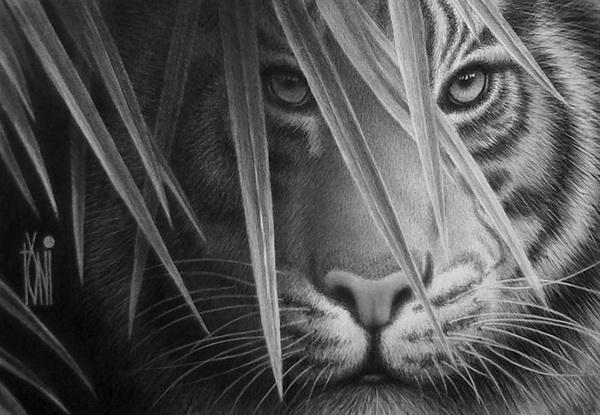 tiger drawing 3