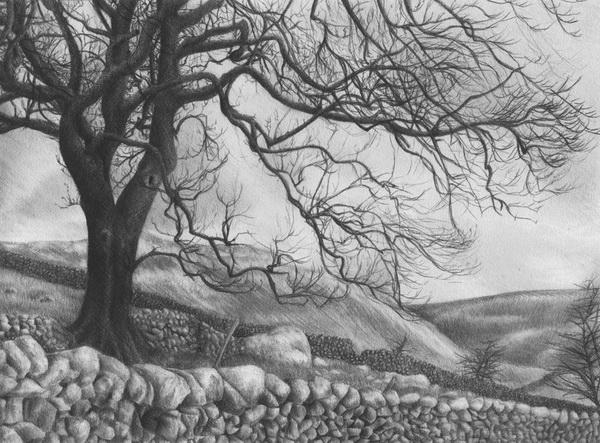 tree drawing 9