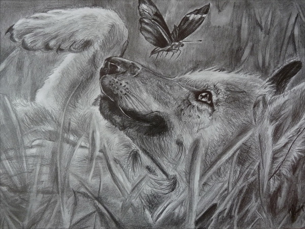 wolf drawing 1