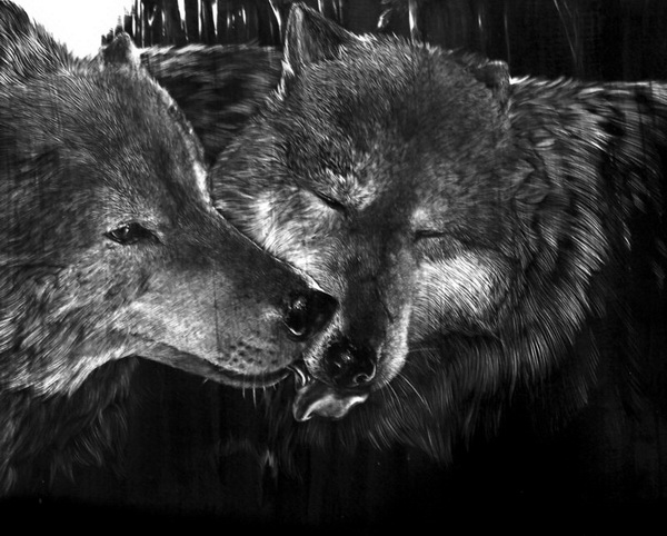 wolf drawing 12