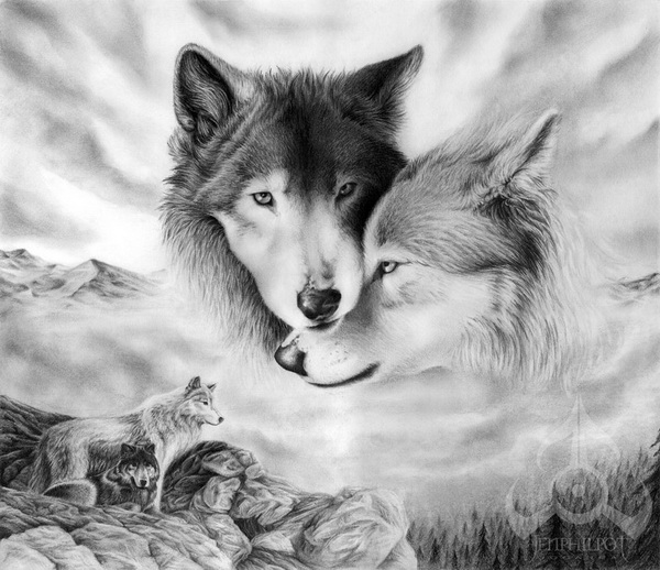 wolf drawing 3