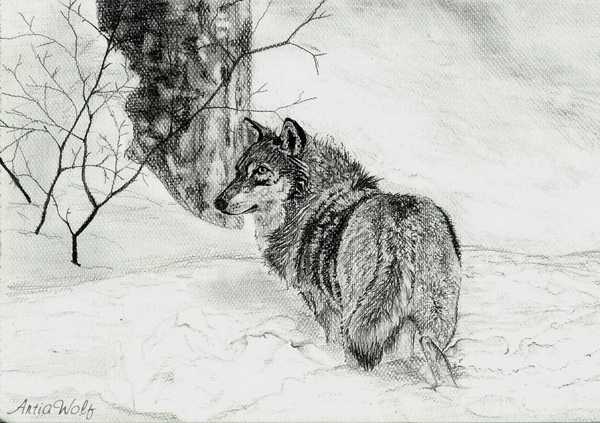 wolf drawing 4