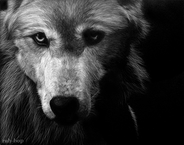 wolf drawing 6