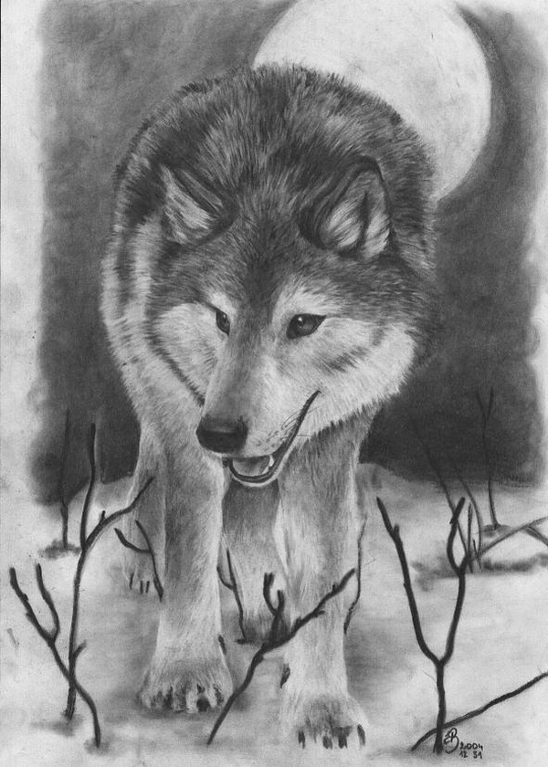 wolf drawing 8