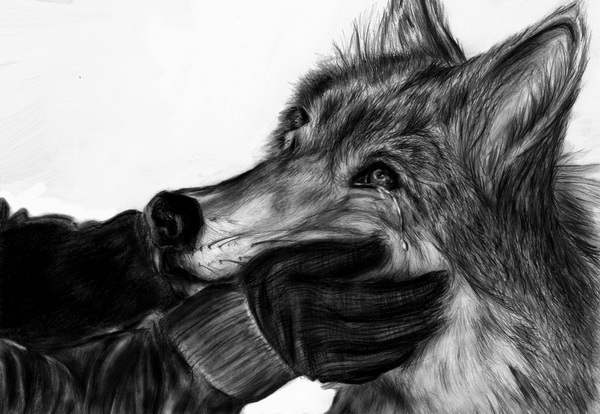 wolf drawing 9