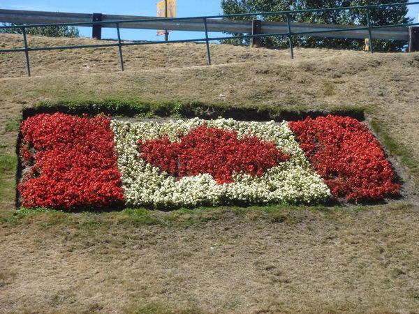 canadian flag flower bed 26