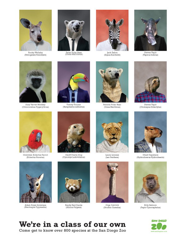 san diego zoo yearbook design idea 19