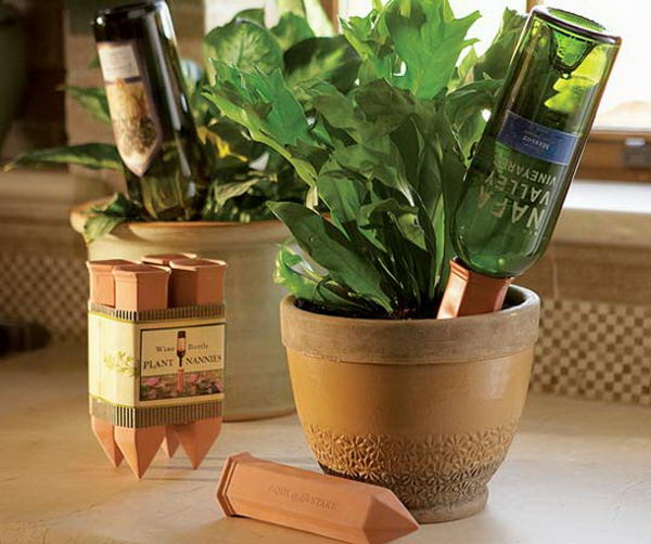 23 wine bottle plant