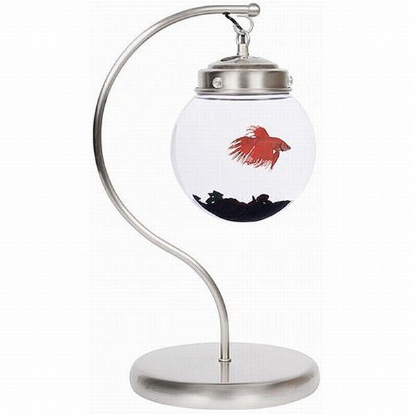 Hanging Fish Bowl. A rare design for aquarium, this hanging bowl acts as a perfect piece of house decor item.