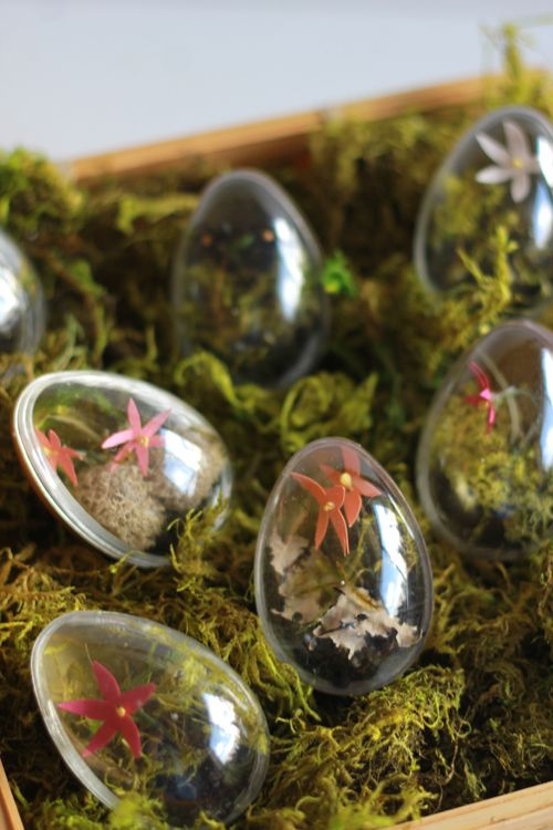 Easter Egg Terrariums.