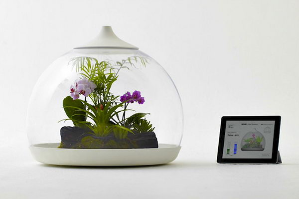 Smart Terrarium Controlled by iPad.