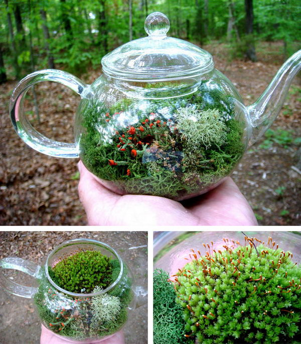 Tea Pot Terrarium. If you wish to add a romantic and rustic touch to your afternoon tea time table, transform a transparent glass teapot into a terrarium, with different kinds of plants, placed as a centerpiece.