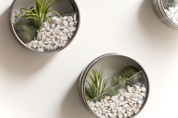 DIY Terrarium Favors on Wall. Magnetic metal tins are the perfect containers for tiny vertical terrariums. These vertical terrarium wedding favors make great gifts because they don't take any room.