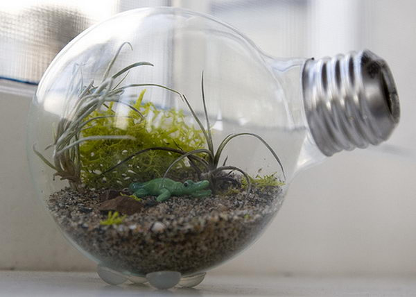 Light Bulb Terrarium. Used light bulbs could be the setting for an adorable miniature terrarium.