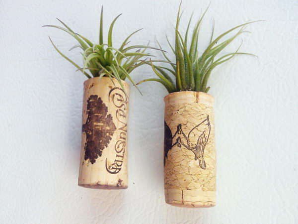 Cork Air Plant Magnets.