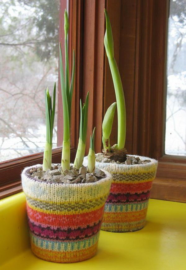 Sweater Covered Flowerpots.