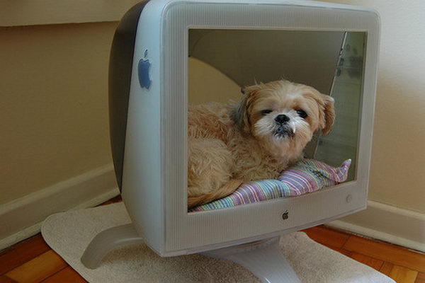 Cool Pet Bed Ideas. Unused stuff at your home can be recycled and turned into pet beds that looks packed yet stylish.
