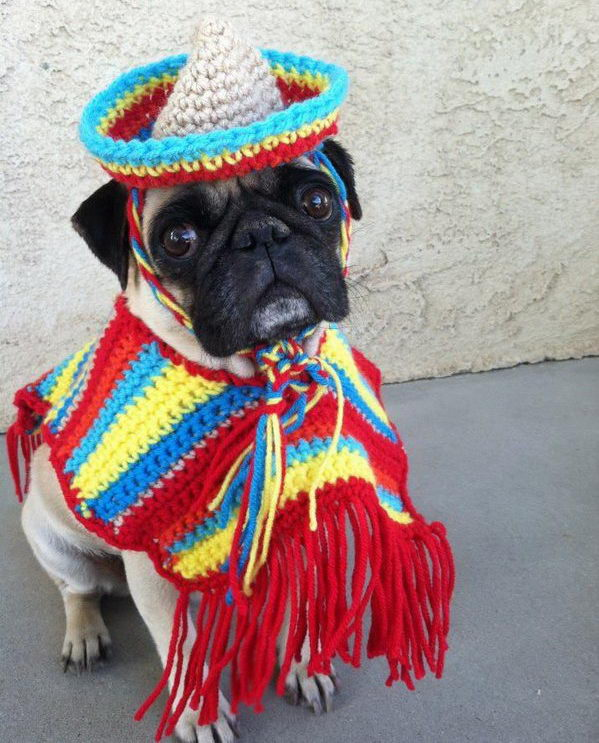 Cool Pet Costumes for Halloween.