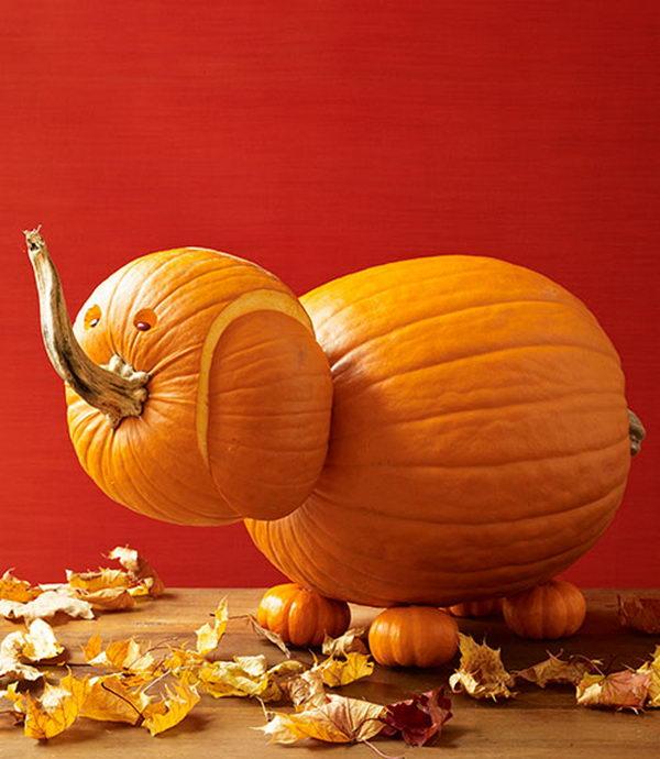 Elephant Pumpkin.