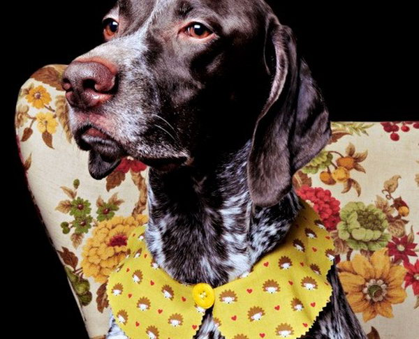 Peter Pan collar for your Pooch. A fun and funky fashion statement for your pet.