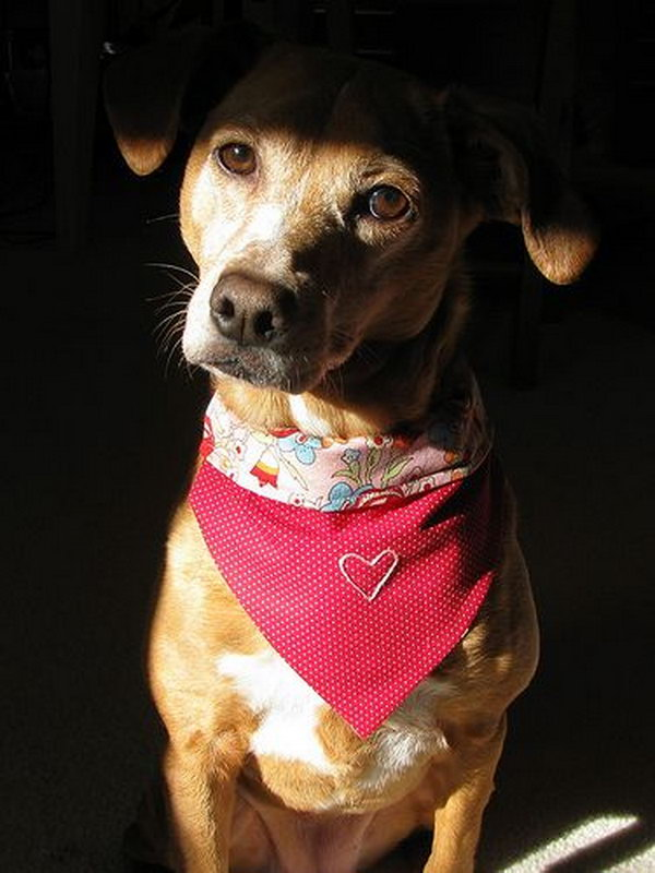 DIY slip on collar bandana. A fun and funky fashion statement for your pet.