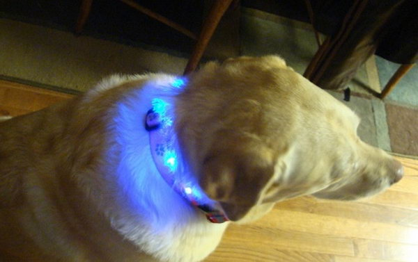 LED dog collar. A fun and funky fashion statement for your pet.